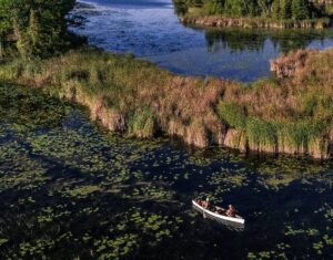 Seen from above, two canoeists paddle through a marshy area
