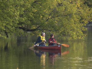 A man paddles in the stern of a canoe and a woman paddles in the bow as they pass beneath a low-hanging branch