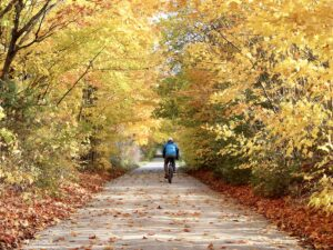 A cyclist rides down an open bike path with a corridor of yellow leaves overhead